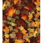 Autumn Falling Color Leaves Puppy Belly Band