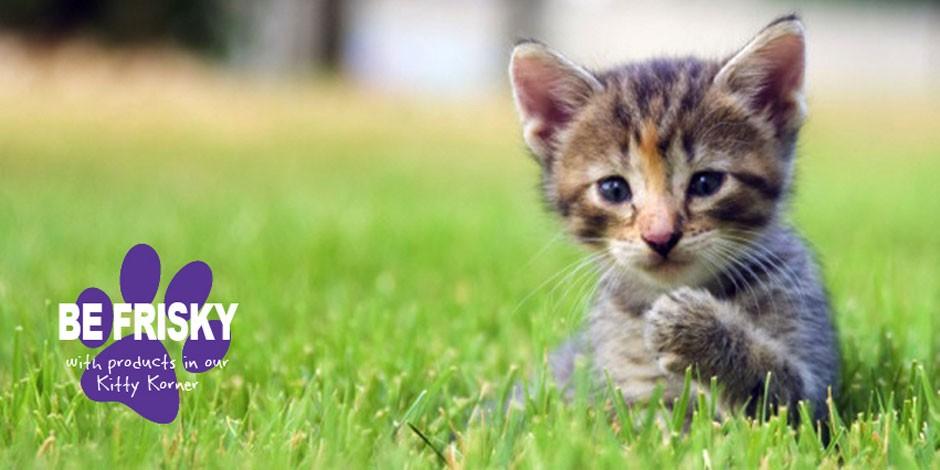 Be Frisky in the Kitty Korner